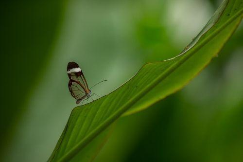 curso fotografia Bilbao - mariposa